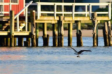 8407 Fishing Island Road Photo #43
