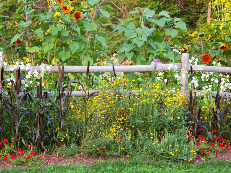 Another rustic mortised fence with lovely rounded beams, creating a barrier between a field of sunflowers and a meadow.