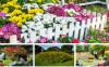 fsmall-garden