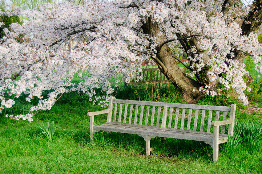 60 garden bench ideas for Benches that go around trees