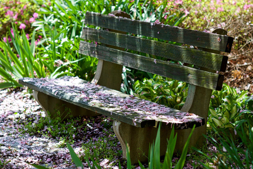 This worn out, moss covered wooden garden bench is old but still functional - and with the scattered blossoms, still beautiful.
