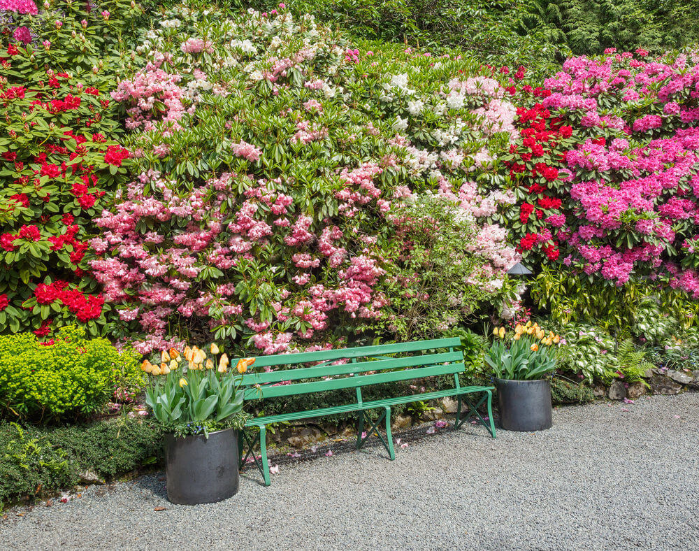A green steel garden bench is almost camouflaged by the presence of thick flowering bushes flaunting their red and pink blooms.