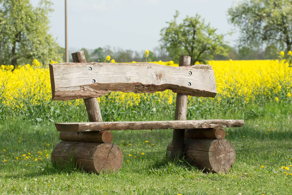 Logs were cut into halves and slabs drilled and screwed together to make this log bench, which is standing in front of a vast and bright yellow blossom field.