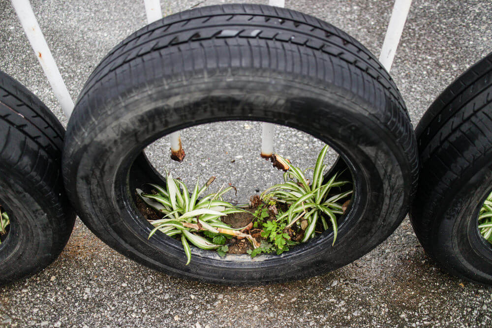 Example (not a great one) of a tire planter situated upright.