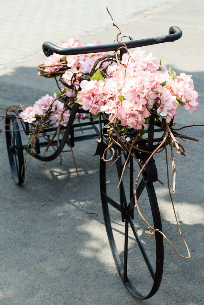 Antique tricycle ladened with beautiful pink flowers.