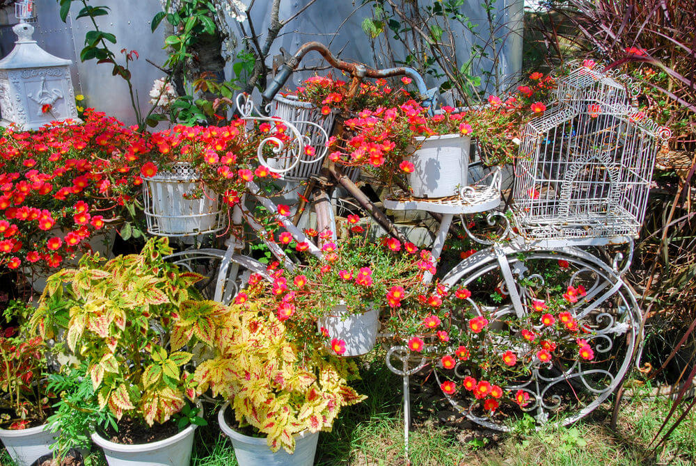 Bicycle planter overrun with flowers in jumble of potted flowers.