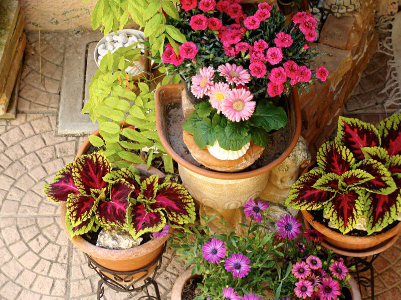 down view of potted plants and flowers in pots elevated in iron pot