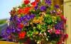 5hanging-basket-flowers