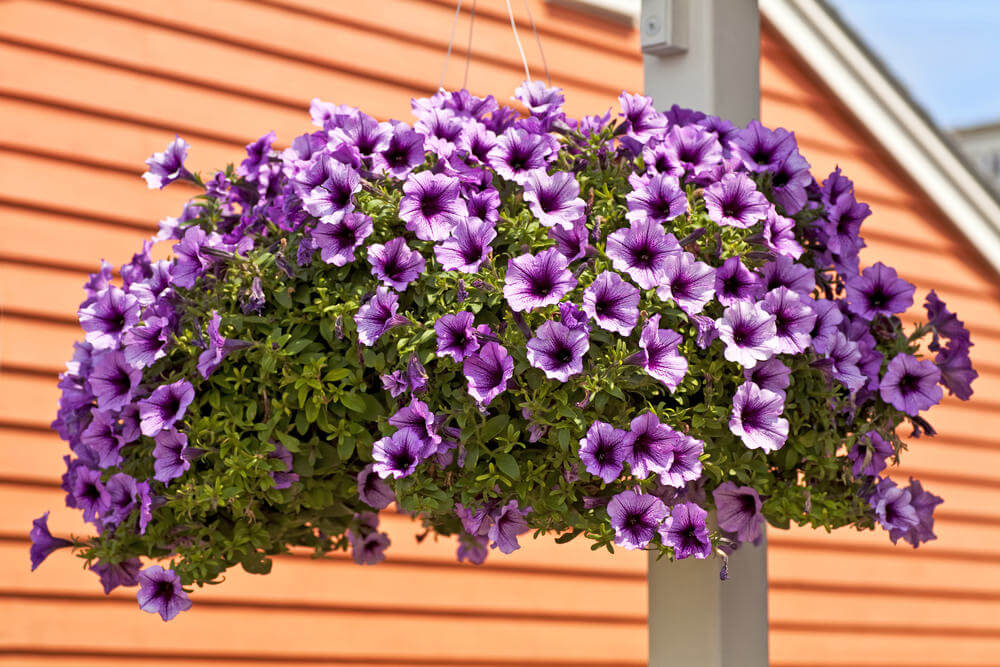 Flower Baskets Photos : Hanging flower planter ideas photos and top