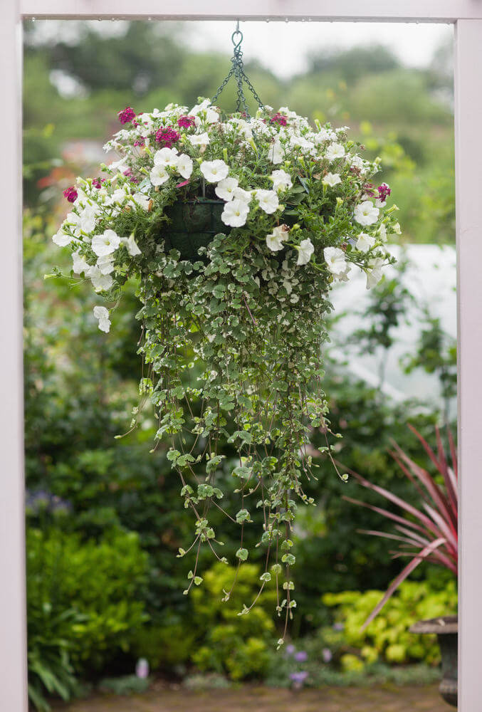 Hanging Flower Baskets Care : Hanging flower planter ideas photos and top