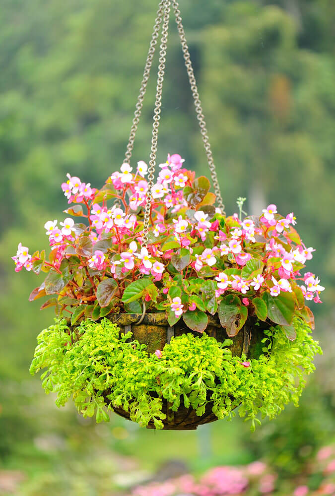 Growing Hanging Flower Baskets : Hanging flower planter ideas photos and top