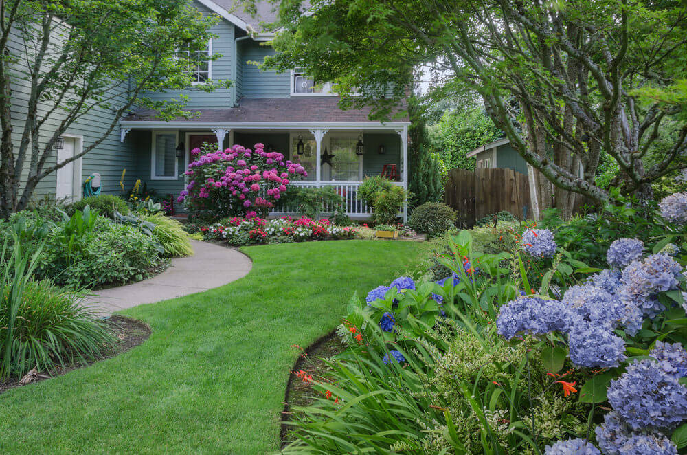 front yard flower garden plans. violet hydrangeas in a front yard with other flowers and grasses as well separate flower garden plans