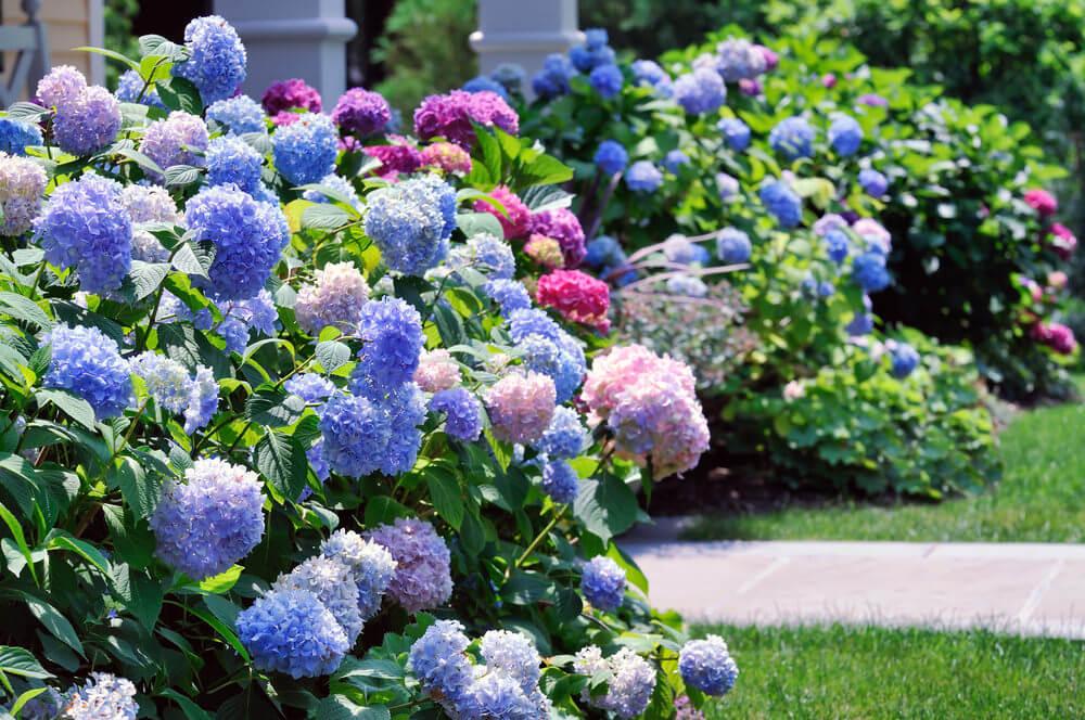 Home stratosphere interior design home decor landscape - Hydrangea in garden design ...