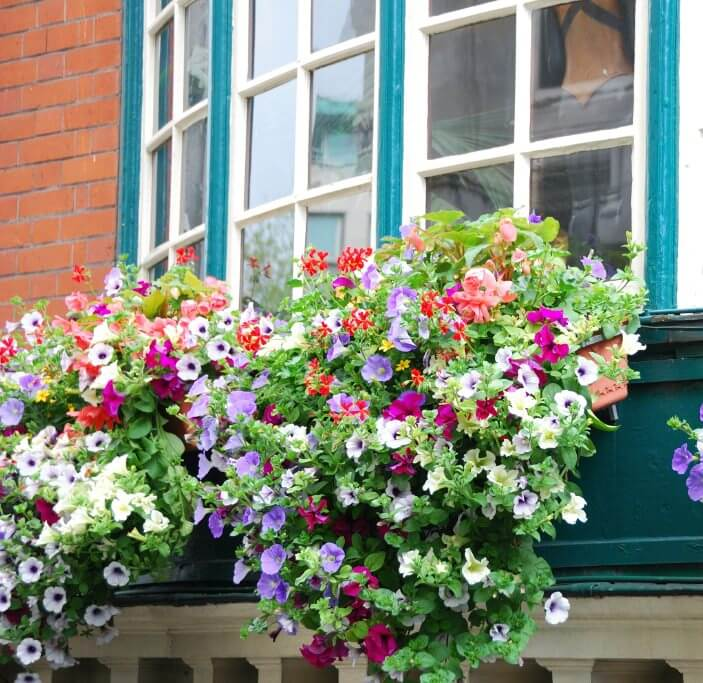 40 window and balcony flower box ideas photos for Low maintenance fall flowers