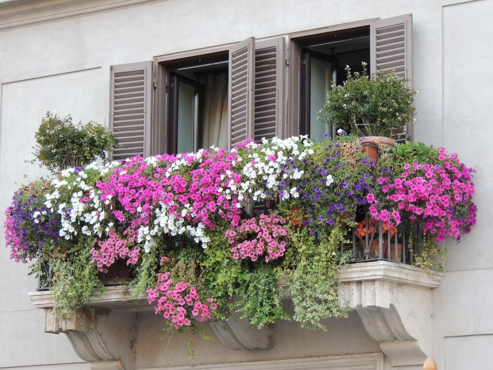 40 window and balcony flower box ideas photos for Balcony flowers