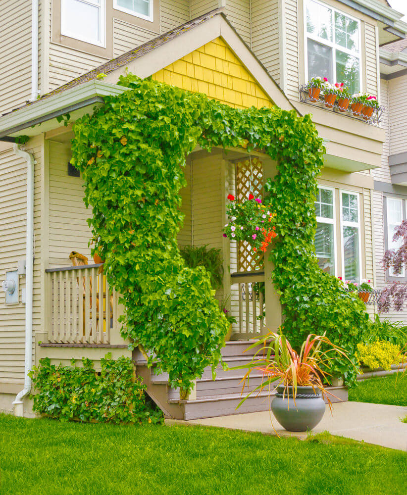 Twining Ivy on symmetrical posts and railings accented with a hanging planter planted with pink, orange and red petunias. In addition, potted landscape grass also steals the spotlight.