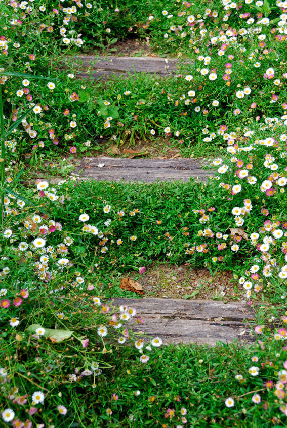 Wood pallet steps with pink and white chamomile.