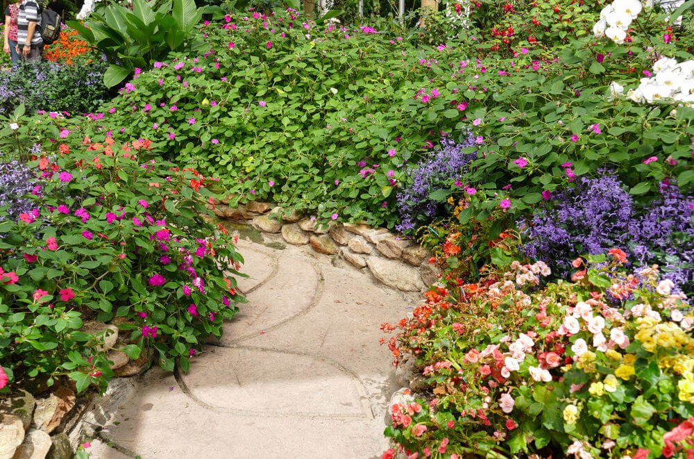 On the other angle, you will see the beauty of this pathway planted with bushes of begonias and other flowering plants.