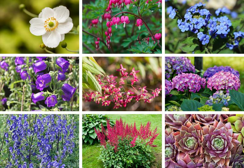 Perennials that love shade