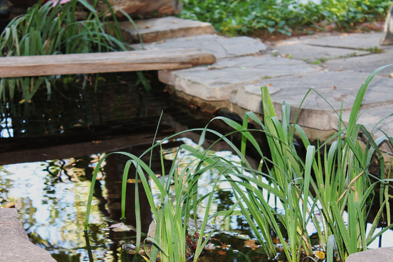 35 backyard pond images great landscaping ideas for Garden pond edging