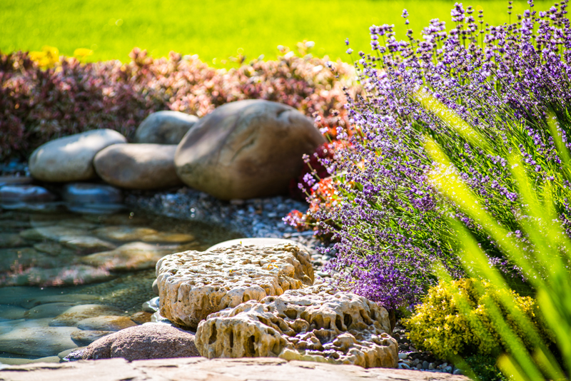 Can you imagine the fragrance of the lavender flowers around this backyard pond? And how beautiful the cavernous white rocks compliment the lavender plants!