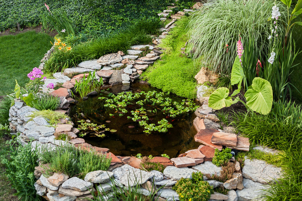 35 backyard pond images great landscaping ideas for Plants for around garden ponds