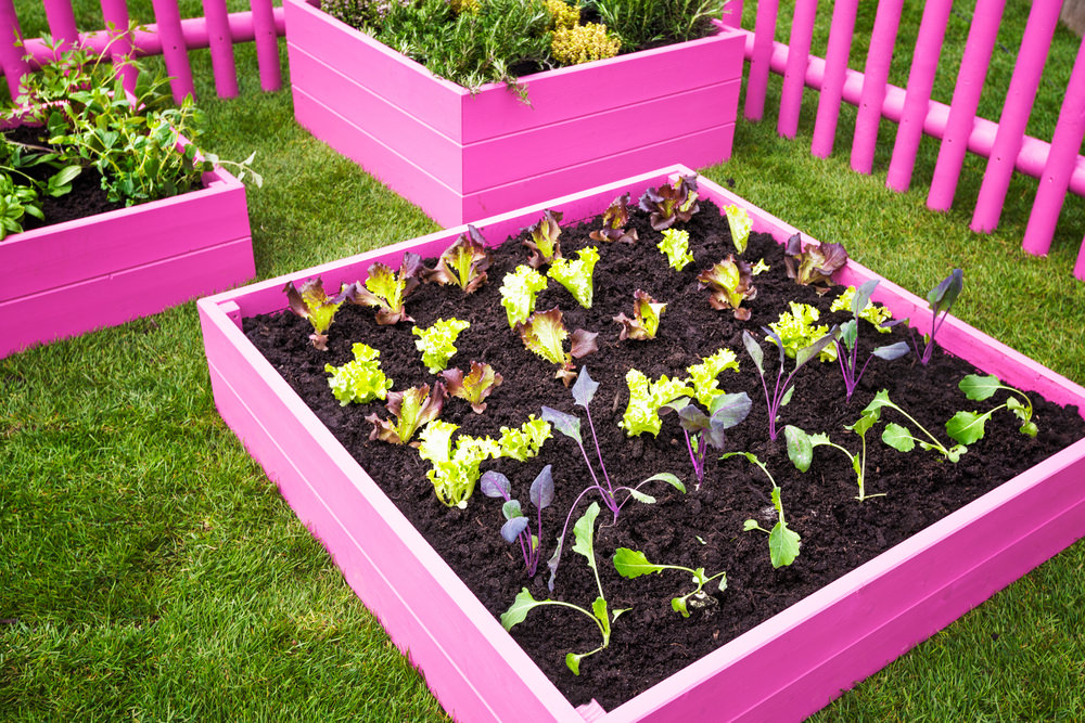 Really make a statement in your garden with a bright color on the boxes and the fencing. Not only does it liven up the landscape, but it also adds a nice amount of charm.