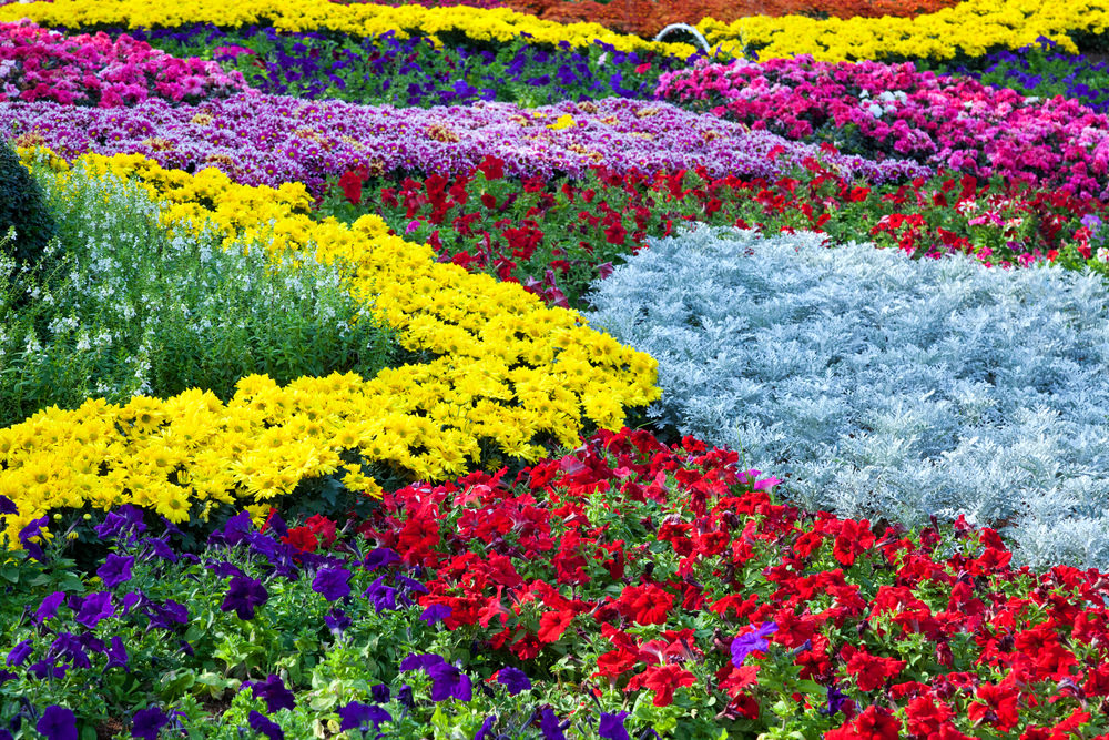 Colorful blossoms overloaded! There are red, purple, white, blue and pink blossoms overcrowding the garden. This feels like wanting to lay down on a bed of colorful blooms and smell their lovely aroma right through your soul.