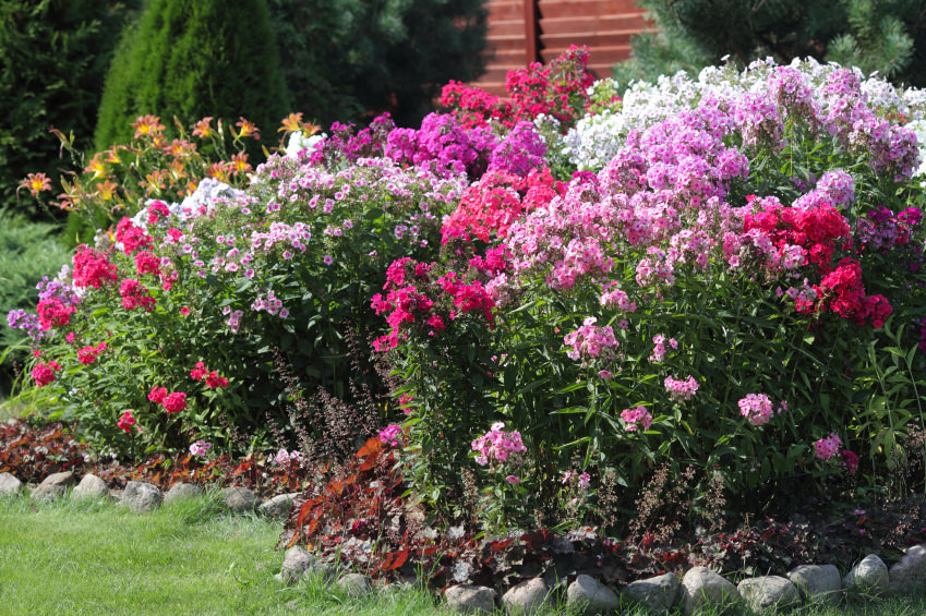 This is a simple yet extra brilliant and glamorous flock of pink, purple, orange and white blossoms in a bush.