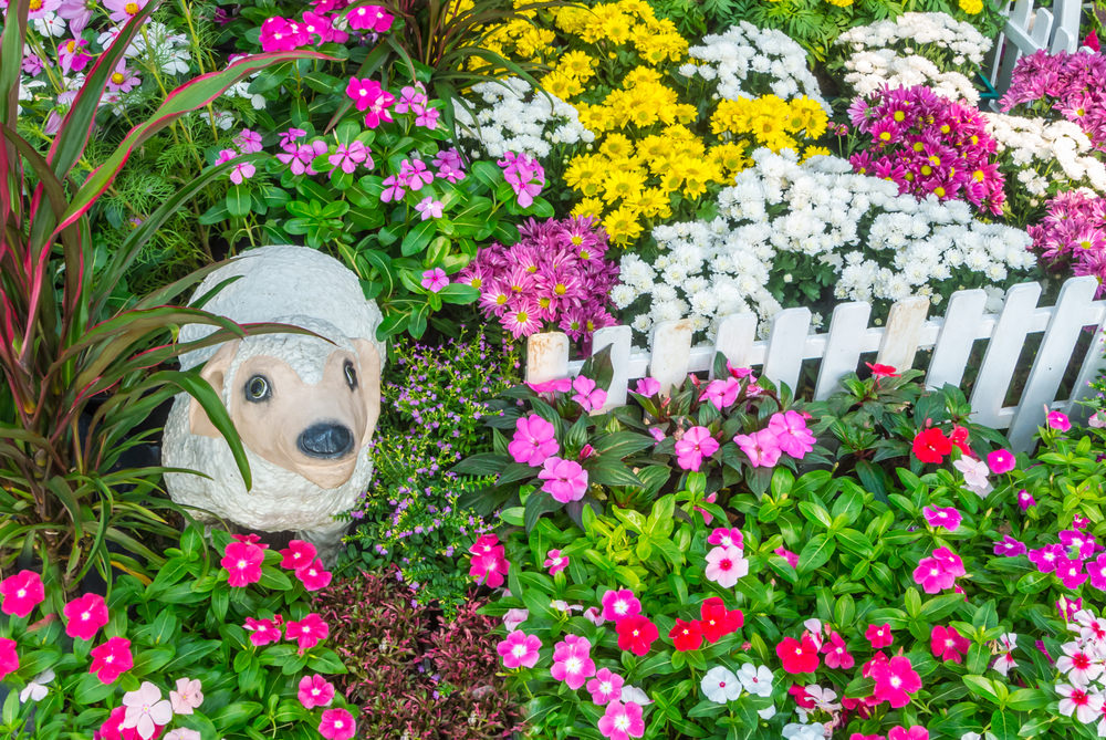 This sheep seem not to care being lost in the bush because it feels like heaven right there as the colorful blossoms of chrysanthemum, petunias and marigolds are quite ecstatic. Well, it is not just seeking a greener pasture but a more colorful one.