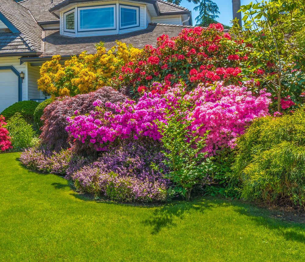 A flock of red and pink blossoms are surrounding a bush and make such a glamorous pile of colors.
