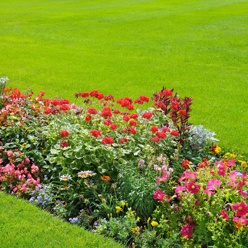 Red geraniums and pink petunias are among the flowers that make up this colorful garden.