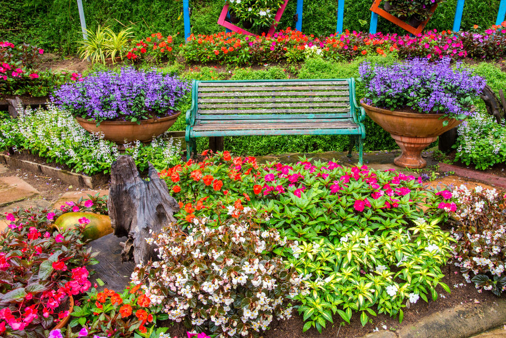 The rustic bench and pots were given life and beauty with the help of these colorful blossoms. To mention some of them, there are the red and white begonias, orange and pink petunias and tiny purple blossoms.
