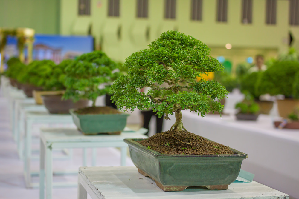 13-bonsai-tree