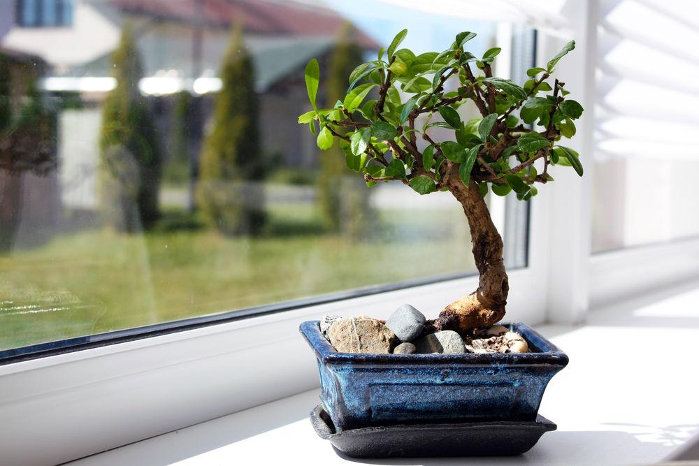 20-bonsai-tree