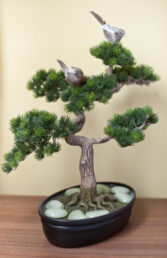 21-bonsai-tree