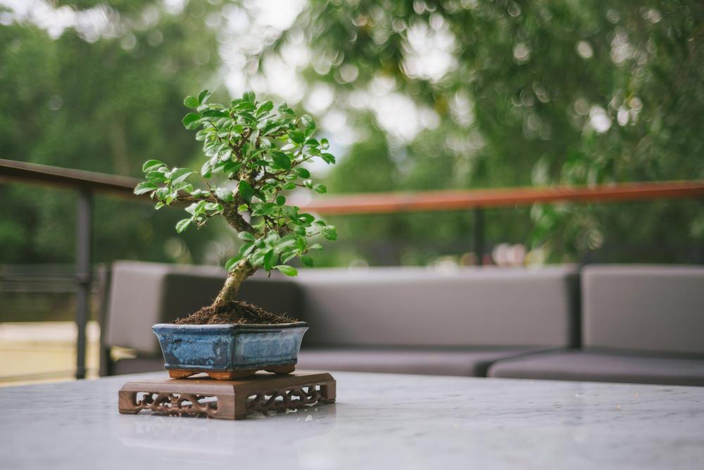 22-bonsai-tree