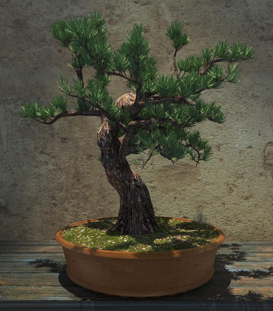 32-bonsai-tree