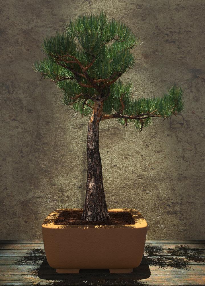 Literati Bonsai Tree