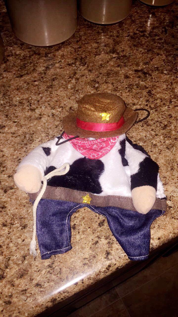 Dog cowboy costume