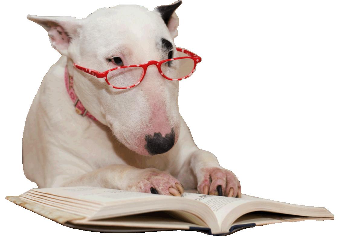 Dog Training Reading