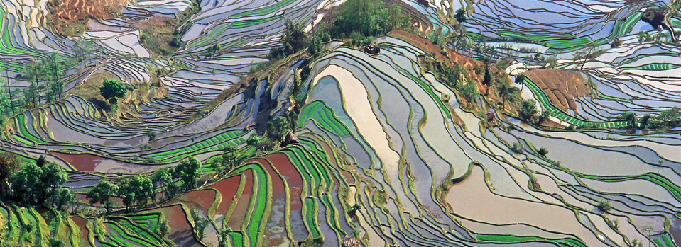 Terrace_field_yunnan_china_denoised_title_092013