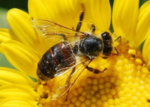 Bee%20(1)