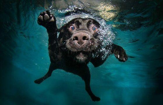 Doggy_paddle