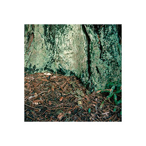Minny_lee_tree