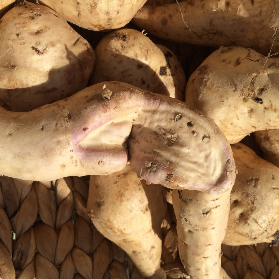 Okinowan sweet potato