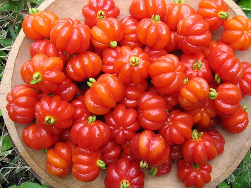 Pitanga fruit, native to Brazil. (Flickr/Bioversity International)