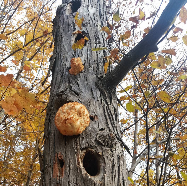 Rob Handel Instagram mushrooms