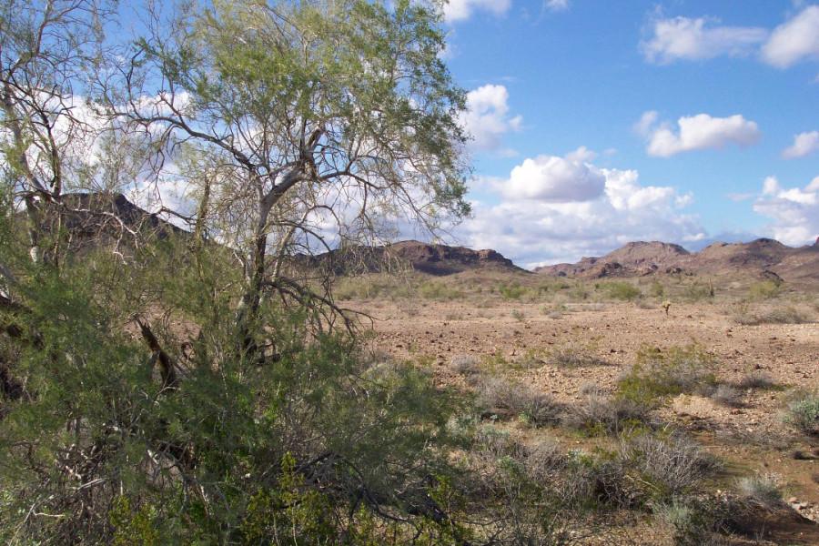 desert-landscape-near-yuma-arizona
