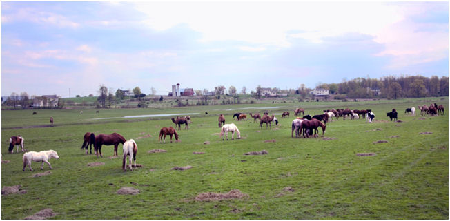 Dawn Sanctuary field of horses pic